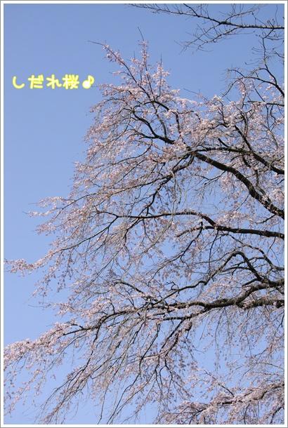 078_20100323231834.jpg