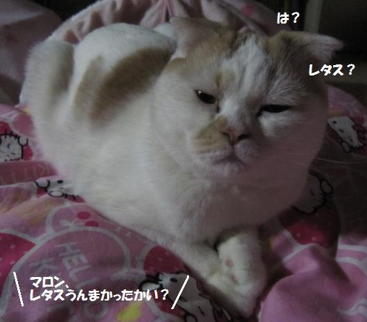 IMG_4642_cc.jpg