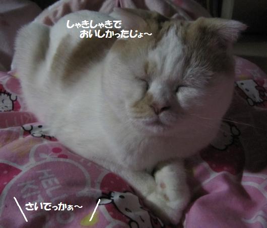 IMG_4643_cc.jpg