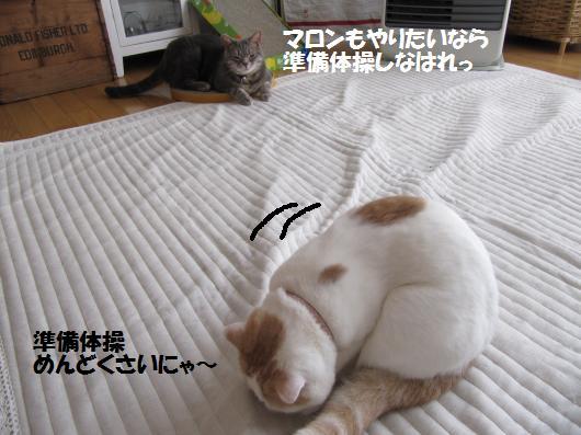 IMG_4879_cc.jpg