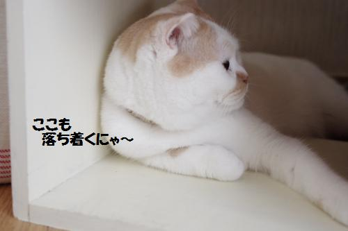 aaasho7.jpg
