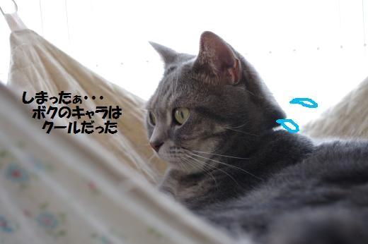 aoka4.jpg