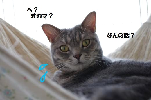 aoka6.jpg