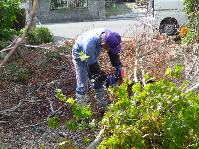震災の塩水で枯れた庭木の手入れ作業