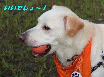 DSCF7068_20140920202617aed.jpg