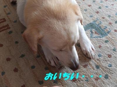 DSCF7215_20140918130048f90.jpg