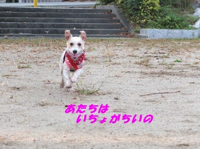 DSCF8377_20141027111351bb4.jpg