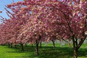 brooklyn-botanic-garden_convert_20110501162934_convert_20110501163230.jpg