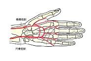 手のひらの血管