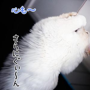 20110602_9.jpg