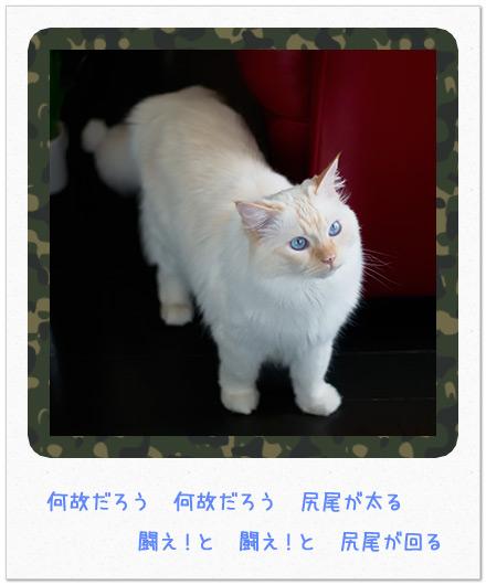20110614_4.jpg