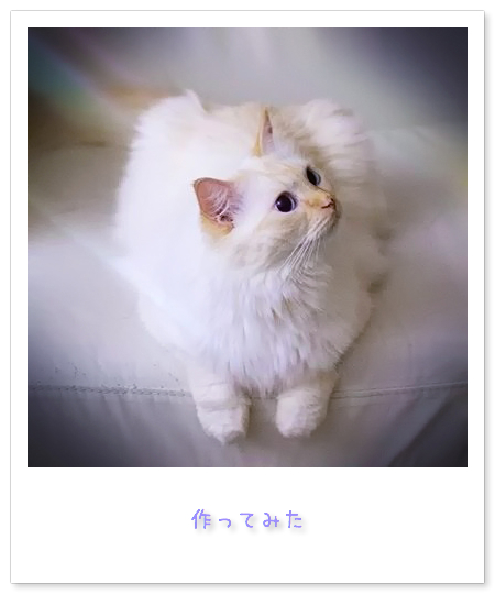 20110620_sumo5.jpg