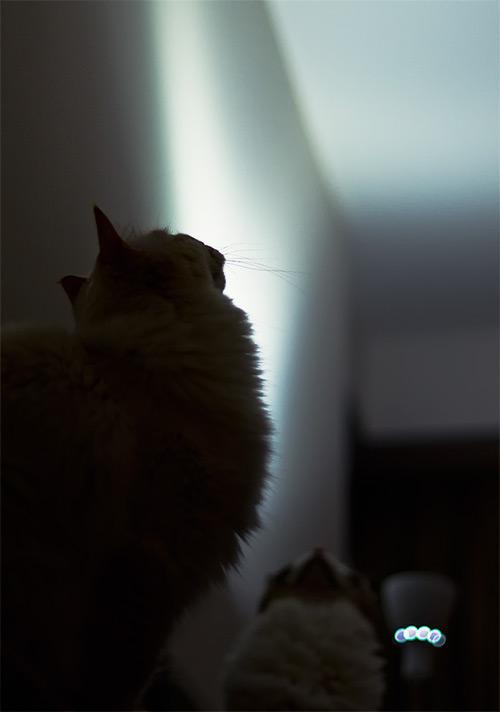 20110621_4.jpg