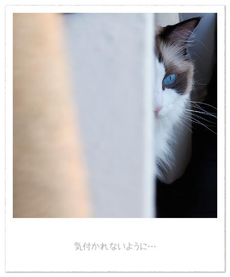 20110629_2.jpg