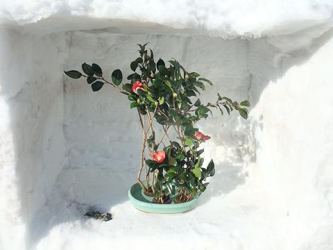 雪中生け花5