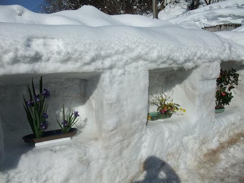 雪中生け花2