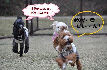 DSC_0780_20111129140742.jpg