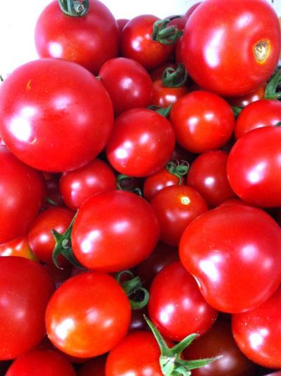 トマト2__