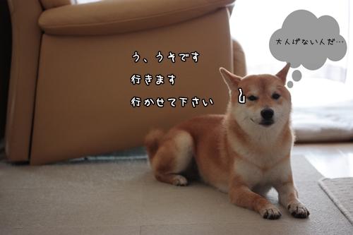 201007183.jpg