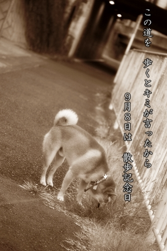 201009081.jpg