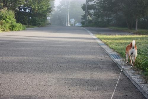 201009161.jpg