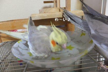 20110923mizuabi2.jpg