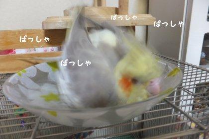 20110923mizuabi3.jpg