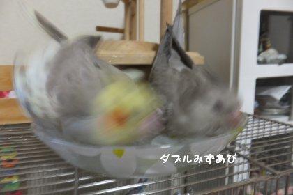 20110923mizuabi4.jpg