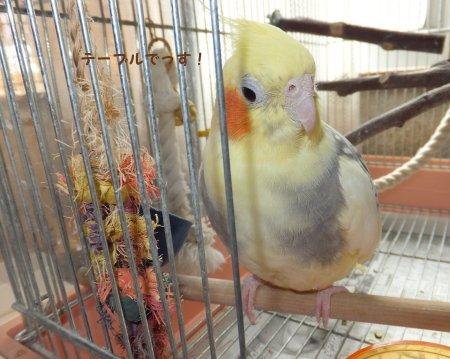 20110924himemomo3.jpg
