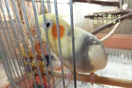 20110924himemomo4.jpg