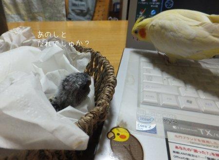 20111013akikusa2.jpg