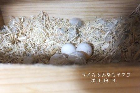 20111017sazamina2.jpg