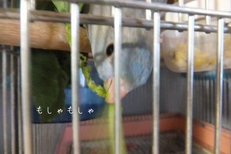 20111030sazahina4.jpg