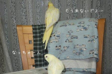 20111117.jpg