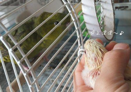 20111121sazaino3.jpg