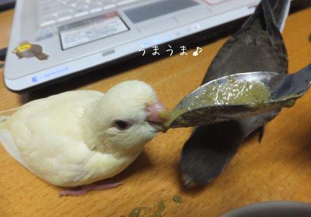 20111203saza-akikusa.jpg