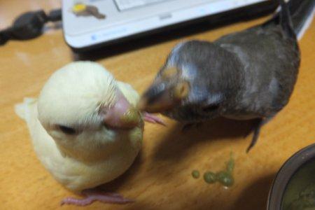20111203saza-akikusa2.jpg