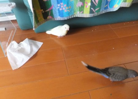 20111203saza-akikusa3.jpg