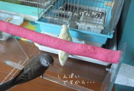 20111203saza-akikusa5.jpg