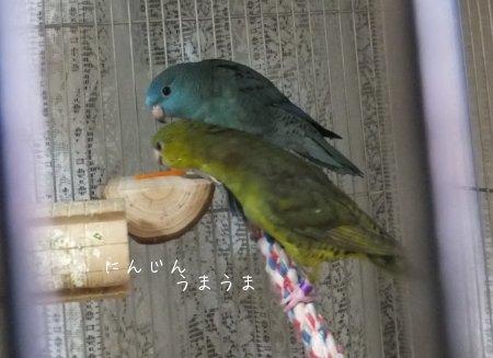 20120223karoto.jpg