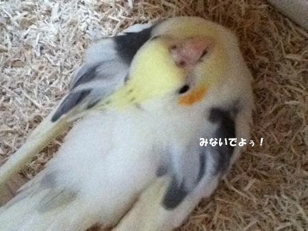 20120407subiki.jpg