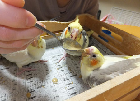 20120505hina.jpg