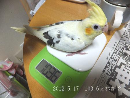 20120517taijyu-2go.jpg