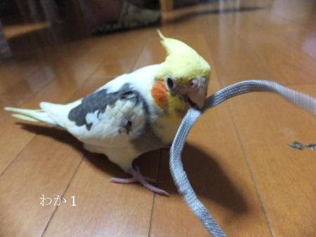 20120518hina1go.jpg