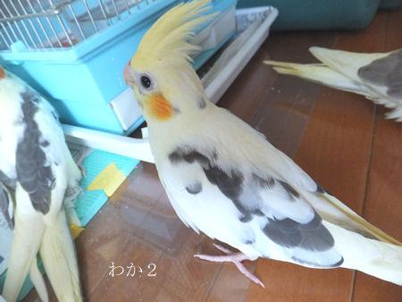 20120518hina2go.jpg