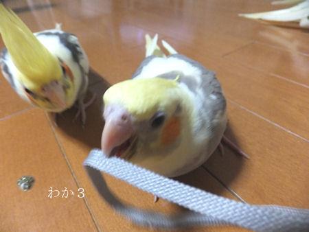 20120518hina3go.jpg