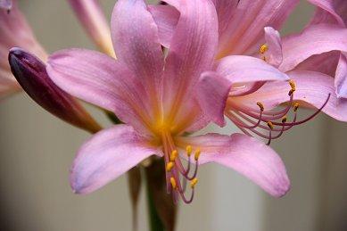 定期的に咲くナゾの花downsize