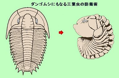 ダンゴムシになる三葉虫