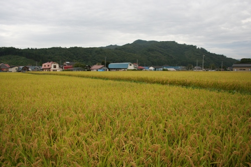 hanamaki_374.jpg