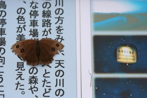 hanamaki_467.jpg
